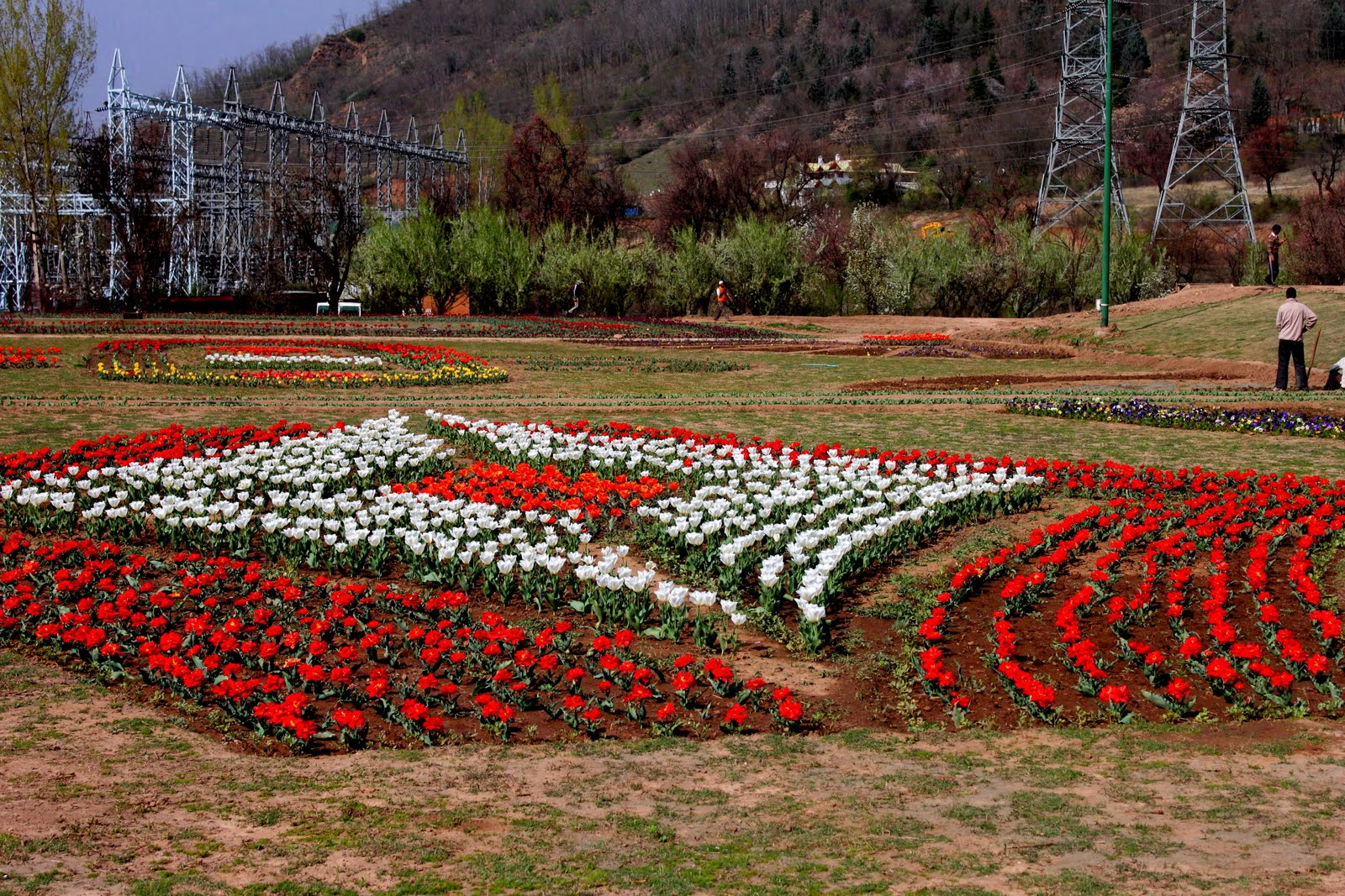 Kashmir natures own ad shahid mehraj rather the designing in the designing of the flower beds initiated this year in the tulip garden of jammu and kashmir has actually not added to the beauty of the garden izmirmasajfo