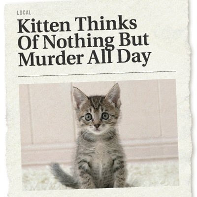 'Kitten thinks of nothing but murder all day - The Onion