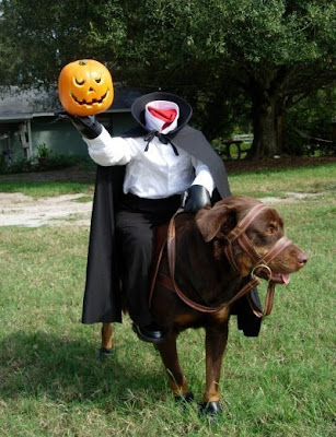Headless Horseman Dog Halloween Costume!