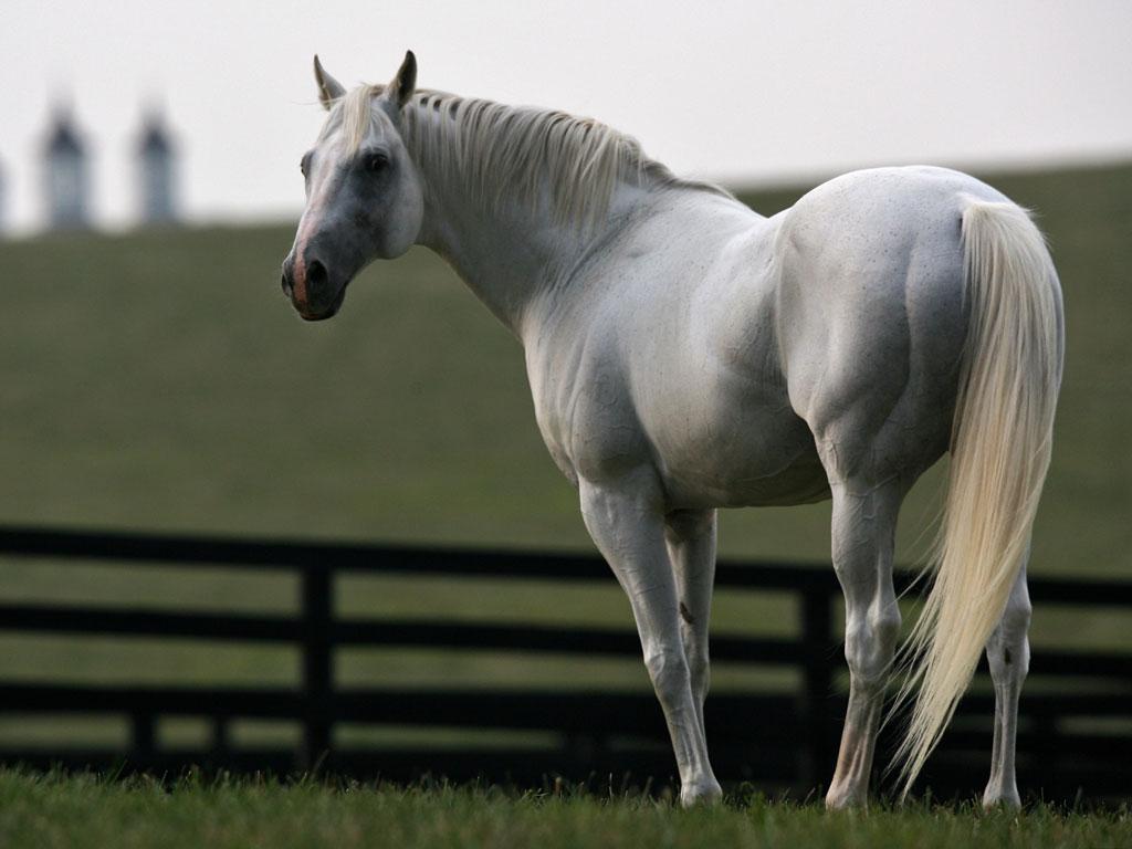 http://2.bp.blogspot.com/_1cAJlMxZb8Y/S7t9GxXh_jI/AAAAAAAABxw/v9CJkaLvC_k/s1600/AlphabetSoup_Horse_Racing_Wallpaper.jpg