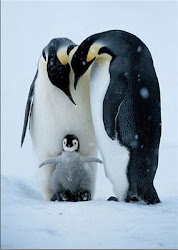 Pinguins!!