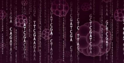 Genetic research on human-animal chimeras