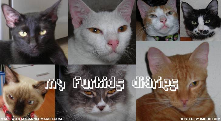 My Furkids Diaries