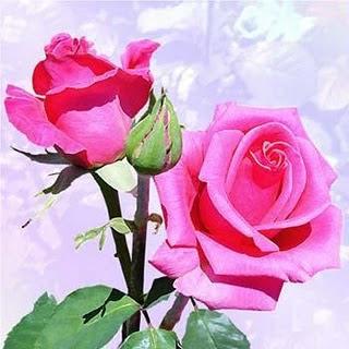 http://2.bp.blogspot.com/_1gs9ABbc9aA/TD42bRgEEMI/AAAAAAAAAU4/EfDfT3hPVuc/s320/1_977928738l.jpg