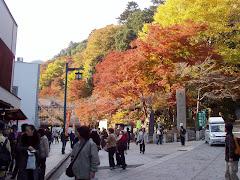 Takao Colors
