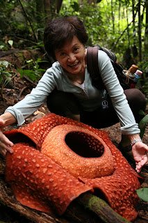 rafflesia species in malaysia identification Malaysian ringgit ringgit malaysia  the malaysian ringgit third series coinage and fourth series banknote designs announced  (the kijang, a species of.