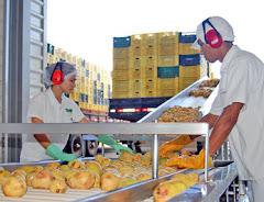 Su Fábrica Pulpa de Frutas Instalada c/Acompañamiento. SALON EMPRENDEDOR