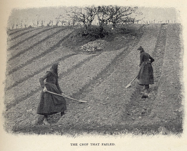the irish potato famine essay The british called it the great famine, the irish middle class called it the the potato, introduced in the this example irish famine essay is published for.