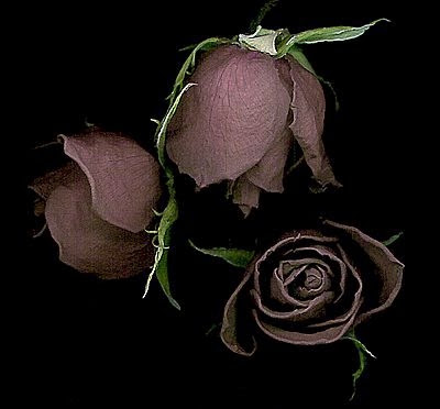 http://2.bp.blogspot.com/_1lzEfbPdcA4/Ryc4uCqohjI/AAAAAAAAAcY/IPbP0W1bY_U/s400/flores.JPG