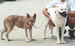 Lobo & Sicha Sunka