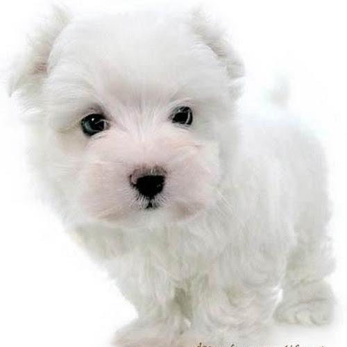 Wallpaper Anjing Paling Lucu