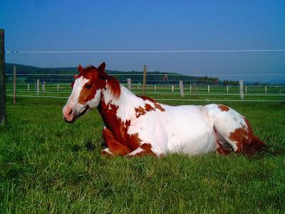 Alle, pferdenamen von A Kind