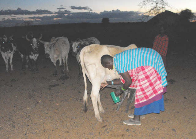 11 novembre - La laitiere au pot au lait