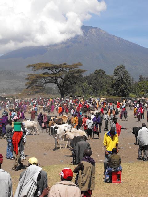 4 novembre - Marche bovin de Ngaramtoni
