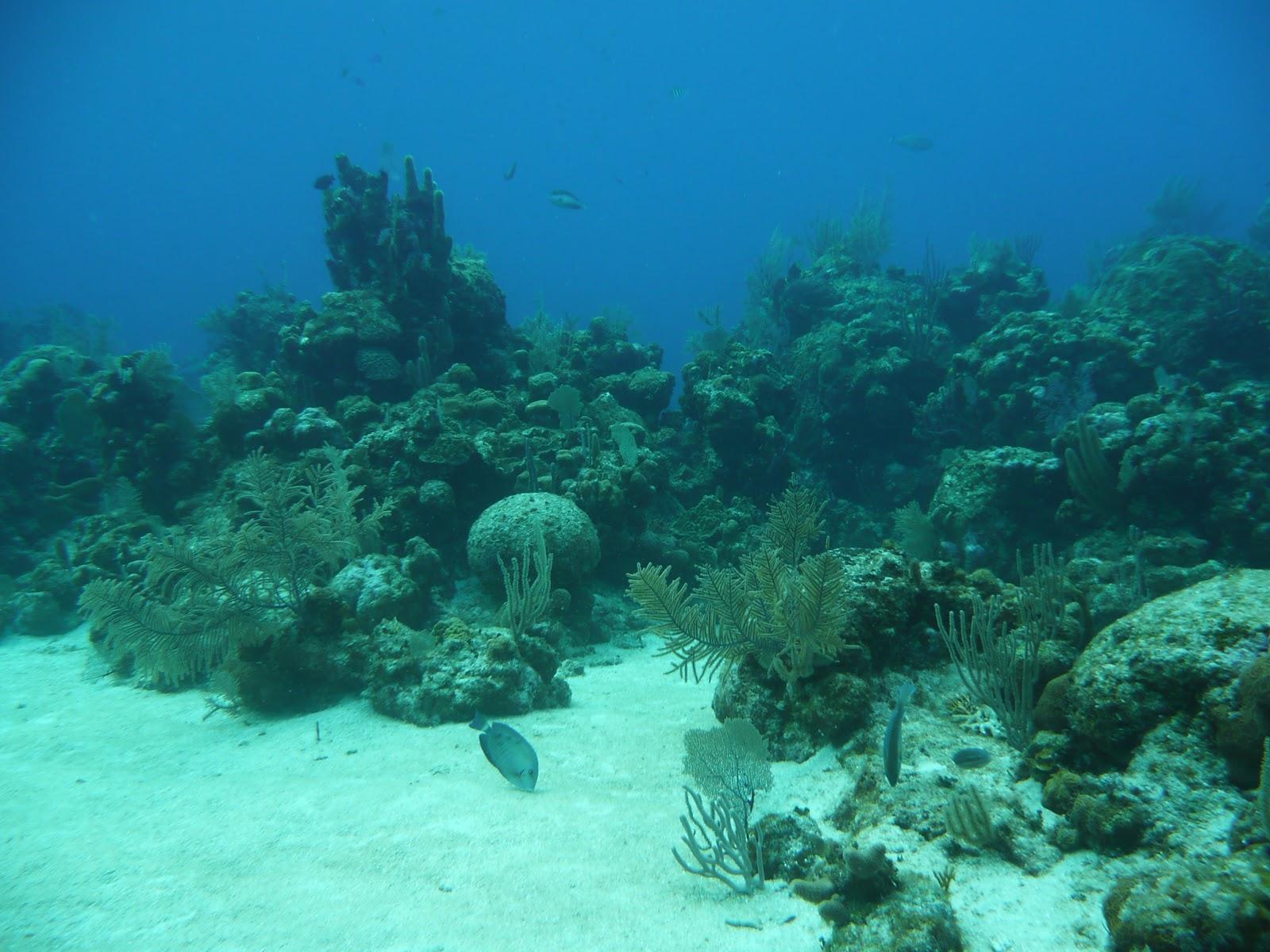 Ocean Plants Underwate...