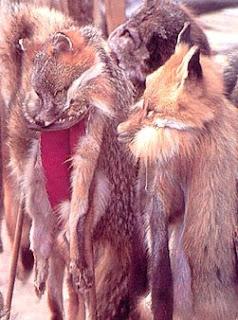 http://2.bp.blogspot.com/_1oeI_YTvkMU/SSJ7G_QmwDI/AAAAAAAAM3s/l0mDb2JYT0k/s320/BWC_fur_dead-animals.jpg