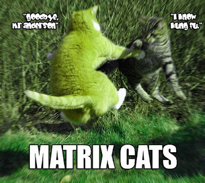 Matrix cats poster