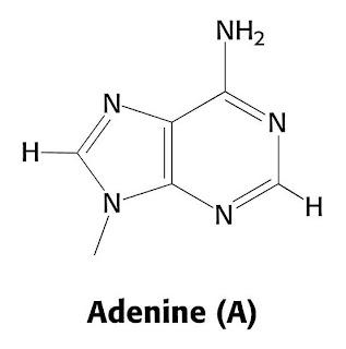 Biotecnologia adn for Molecula definicion