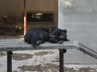 Sisaket Zoo
