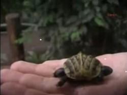 tortuga de 2 cabezas