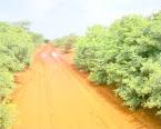 Wadado kamida wadoyinka abudwak kabaxa