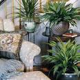[houseplant]