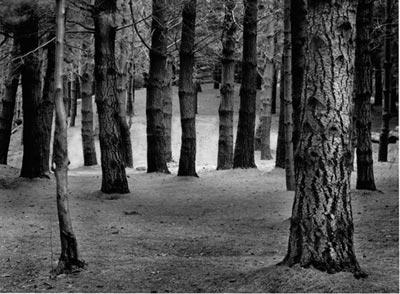 Resultado de imagen de bosque miedo