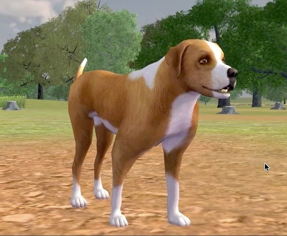 Virtual Dog And Cat Breeding Games