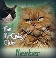 Man cat club member