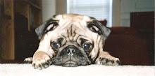 Rocky Pug