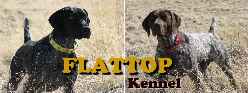 Flattop Kennel