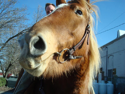 horse in Littleton