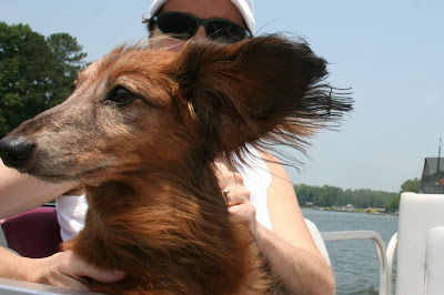 boating with dogs on Lake Gaston