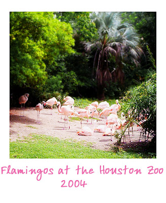 Flamingdogs