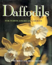 Narcissus
