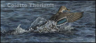 Mallard Duck Painting in pastel