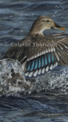 Female mallard painting close up in pastel