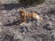 Shed Hunter