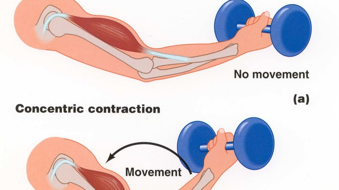Hot rod anglican concentric vs eccentric contractions for
