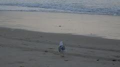 gaivota