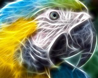 http://2.bp.blogspot.com/_20ZCWec2bbA/SQn8SDi6z6I/AAAAAAAAEzs/inHEhtvdTpA/s400/3D+Wallpapers-Bird.jpg