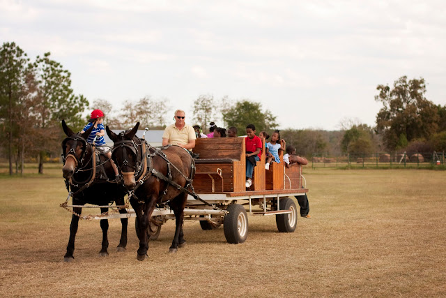 Hay rides at fall festival near Macon, GA