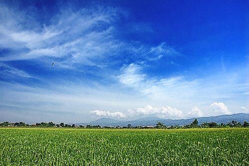 Pesawahan di Bandung Raya