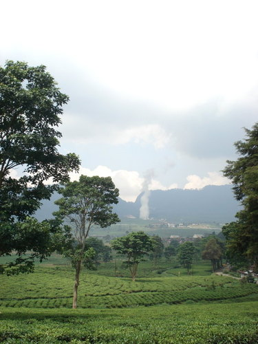 Kertamanah tea plantation
