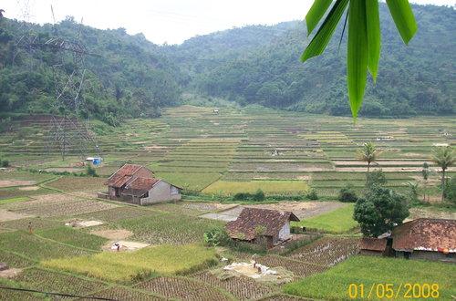 Soreang ricefield