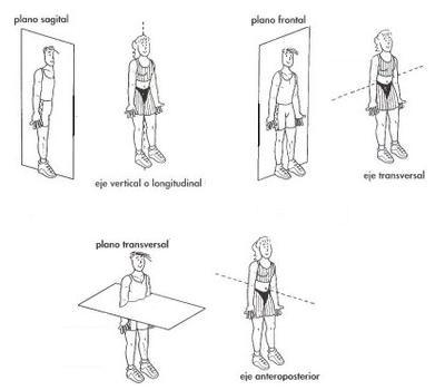 Tu blog de Anatomía: Posición anatómica, ejes y planos