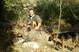 ayvah umut domuz vurdu