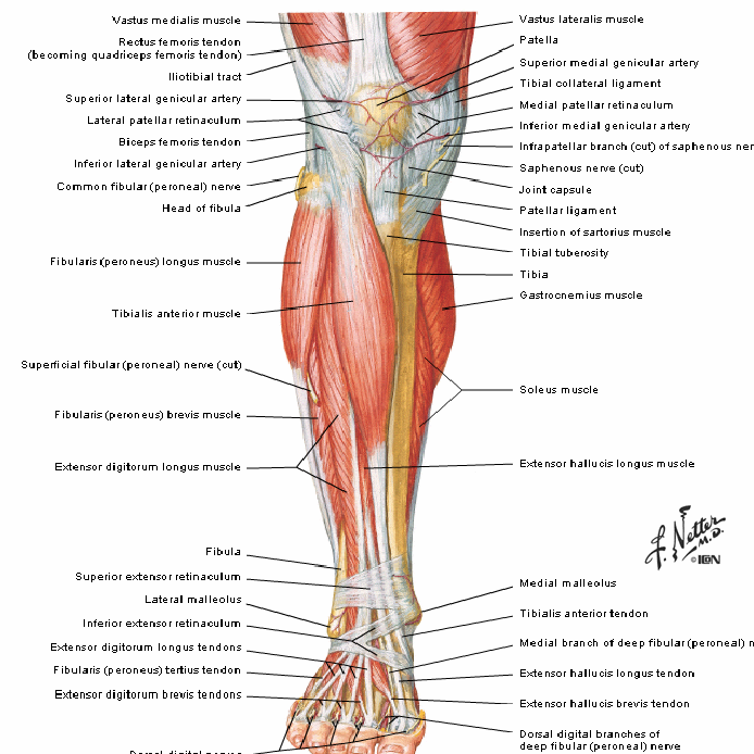 Similiar Medial Gastrocnemius Strain Keywords