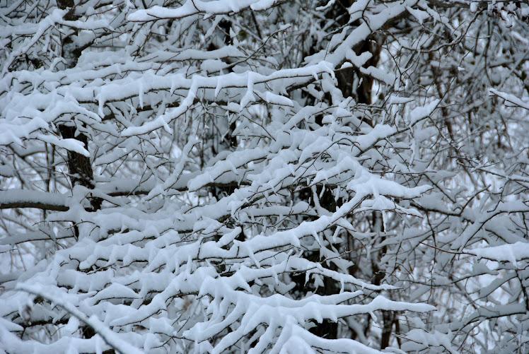carolina forest snowfall