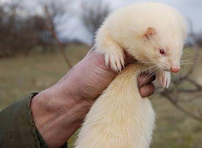 50 Animales Albinos